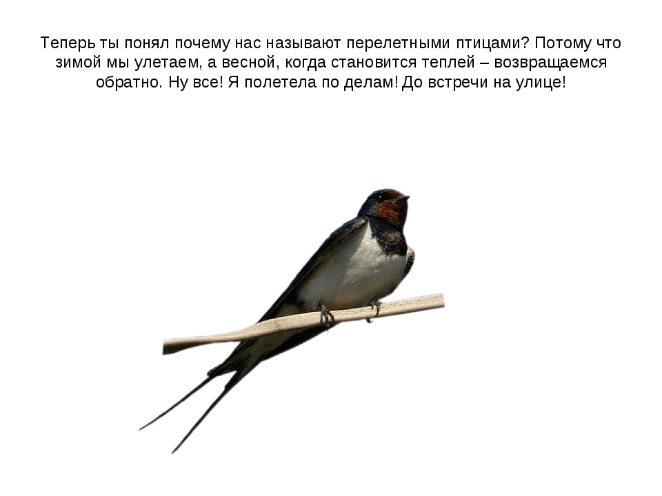 Теперь ты понял почему нас называют перелетными птицами? Потому что зимой мы...