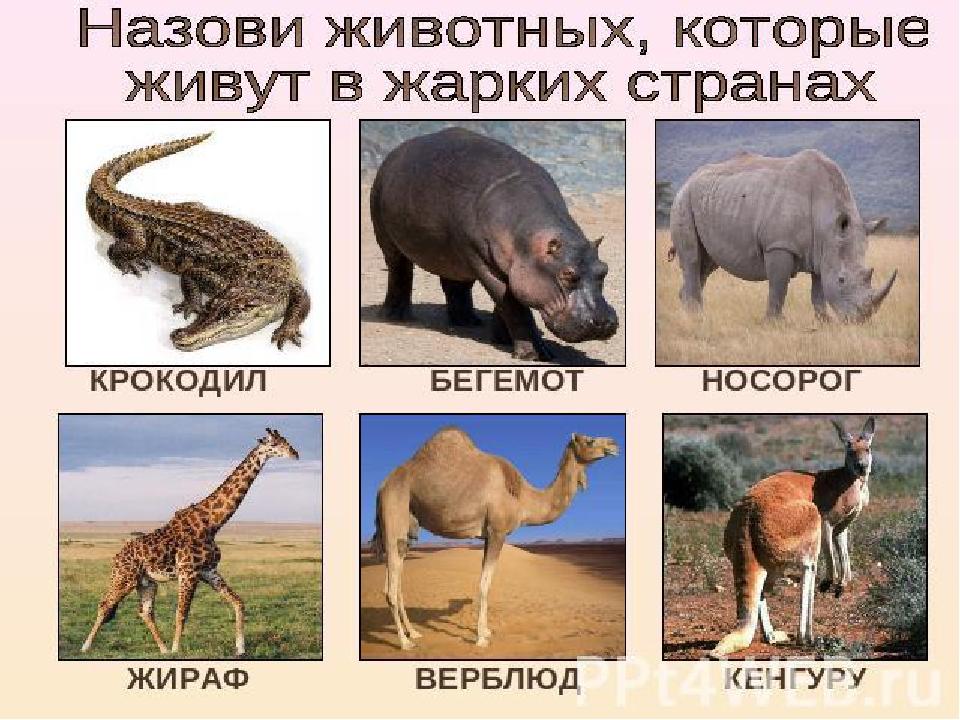 Как назвать с животным