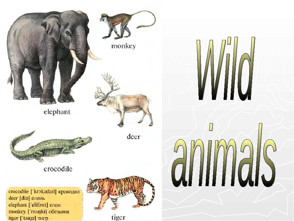 domestic animal essay