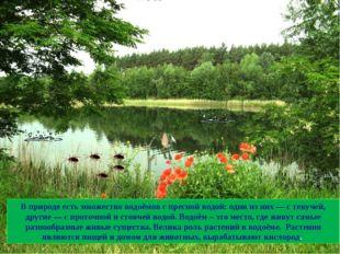 В природе есть множество водоёмов с пресной водой: одни из них — с текучей, д