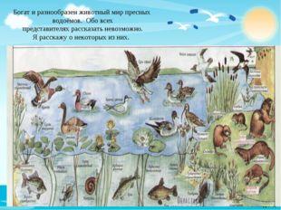 Богат и разнообразен животный мир пресных водоёмов. Обо всех представителях р