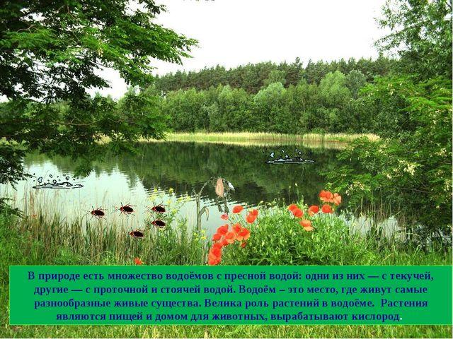 В природе есть множество водоёмов с пресной водой: одни из них — с текучей, д...