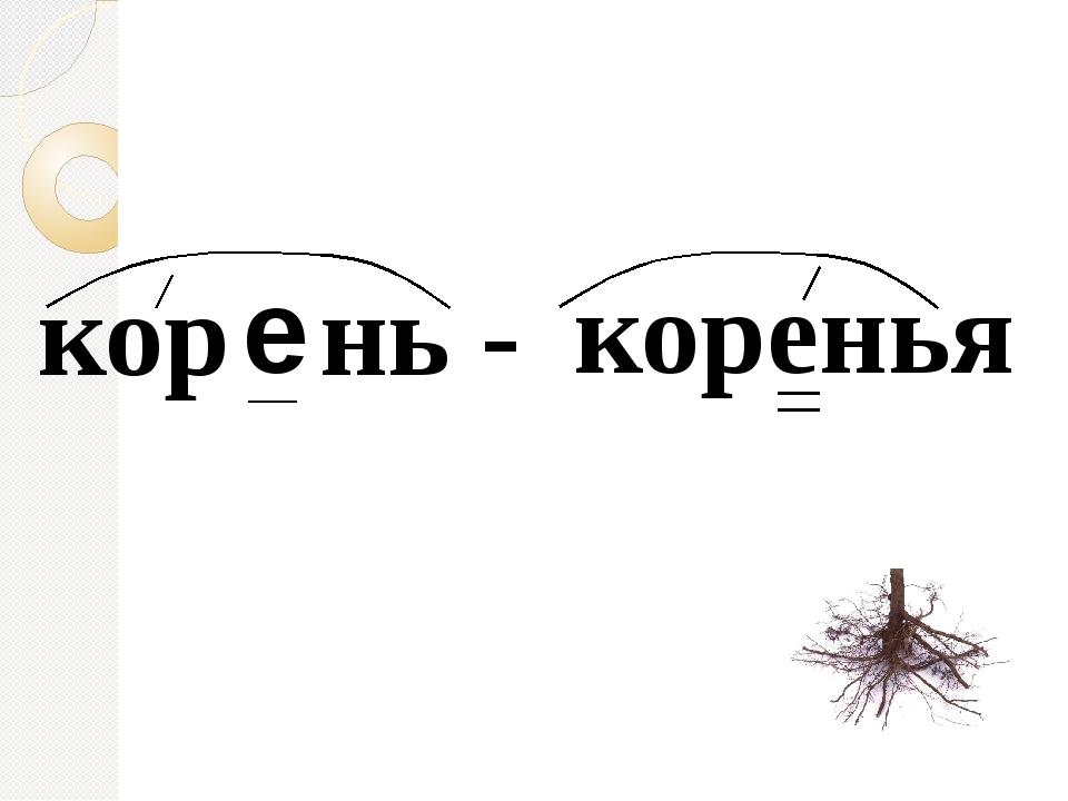 кор нь - коренья е