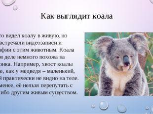 Как выглядит коала Мало кто видел коалу в живую, но многие встречали видеозап