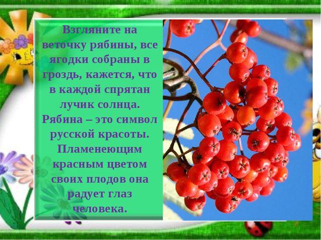 Взгляните на веточку рябины, все ягодки собраны в гроздь, кажется, что в кажд...