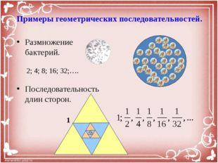 Примеры геометрических последовательностей. Размножение бактерий. Последовате