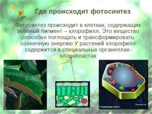 Где происходит фотосинтез Фотосинтез происходит в клетках, содержащих зеленый
