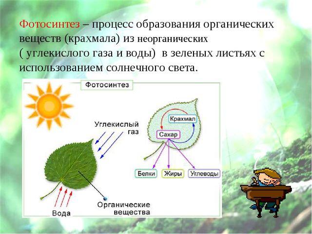 Фотосинтез – процесс образования органических веществ (крахмала) из неорганич...