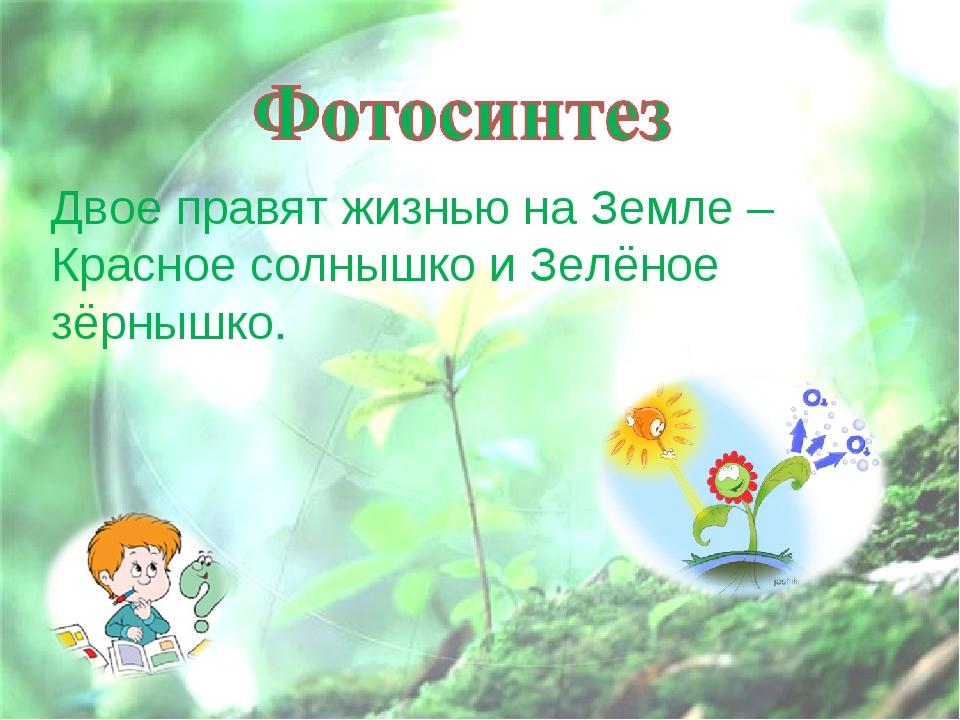 Двое правят жизнью на Земле – Красное солнышко и Зелёное зёрнышко.