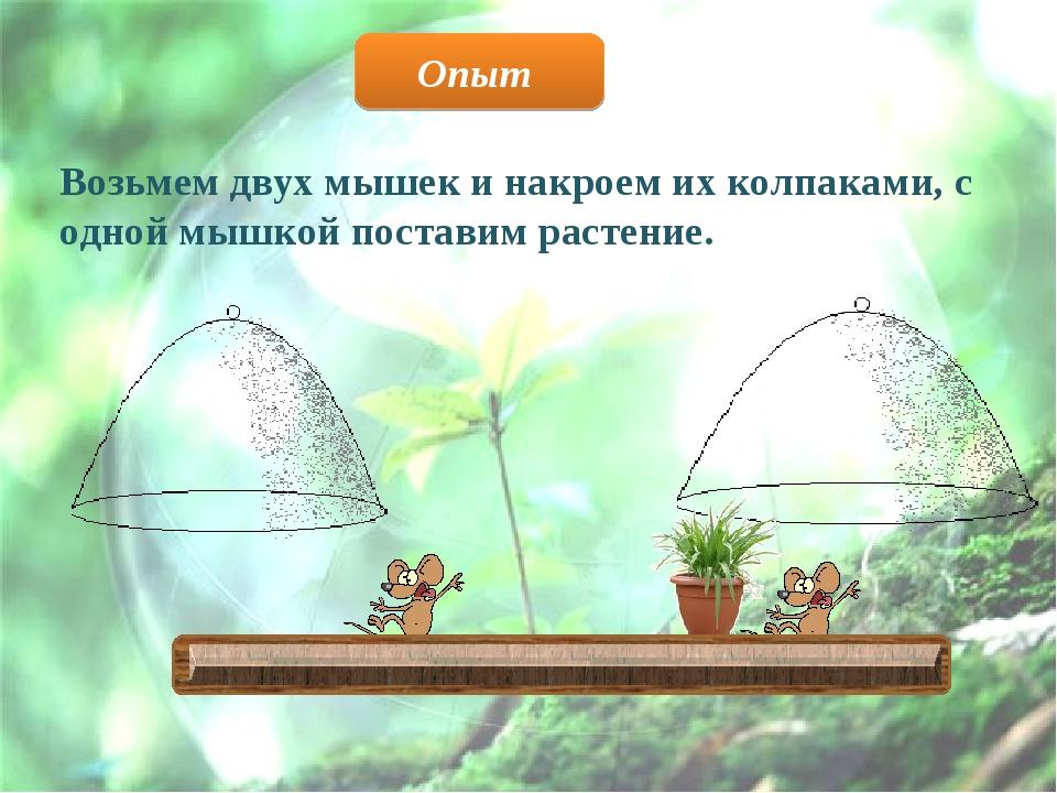 Возьмем двух мышек и накроем их колпаками, с одной мышкой поставим растение....