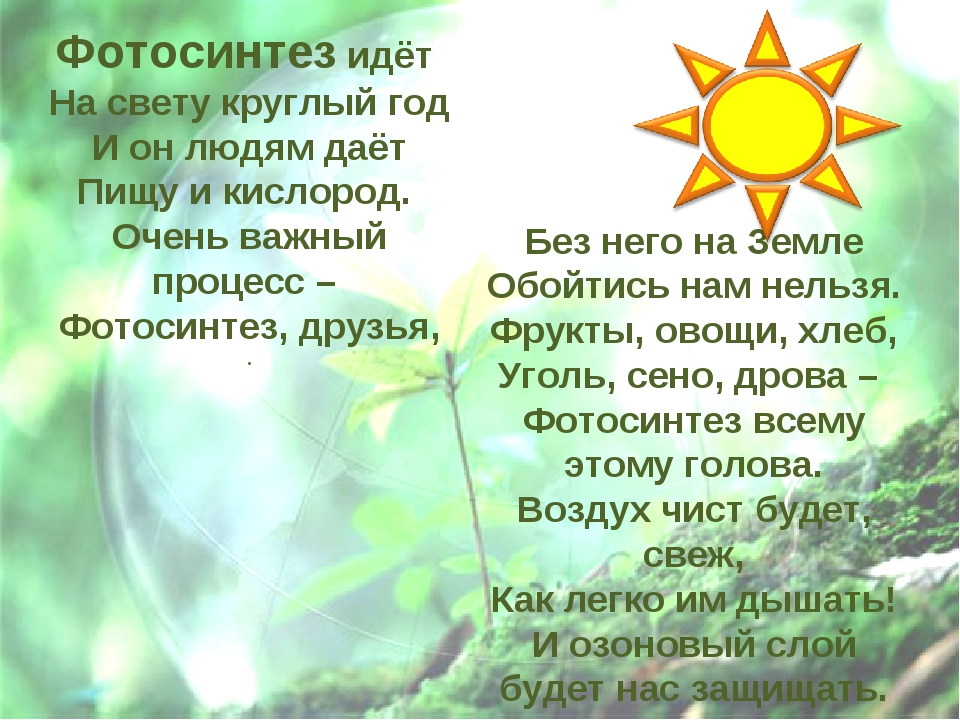 Фотосинтез идёт На свету круглый год И он людям даёт Пищу и кислород. Очень в...
