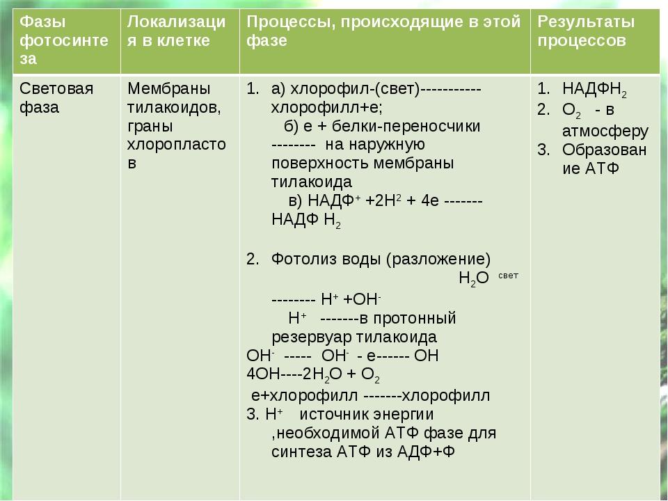 Фазы фотосинтезаЛокализация в клеткеПроцессы, происходящие в этой фазеРезу...