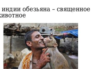 В индии обезьяна – священное животное