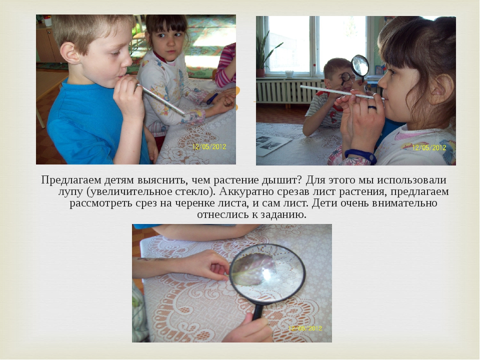 Предлагаем детям выяснить, чем растение дышит? Для этого мы использовали лупу...