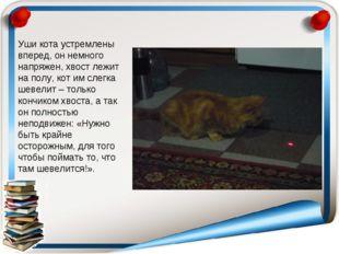 Уши кота устремлены вперед, он немного напряжен, хвост лежит на полу, кот им
