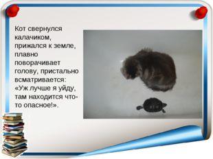 Кот свернулся калачиком, прижался к земле, плавно поворачивает голову, прист