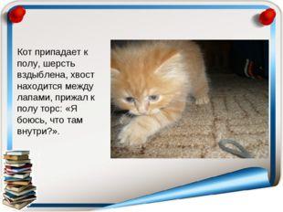 Кот припадает к полу, шерсть вздыблена, хвост находится между лапами, прижал