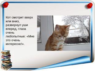 Кот смотрит вверх или вниз, развернул уши вперед, глаза очень любопытные: «Мн