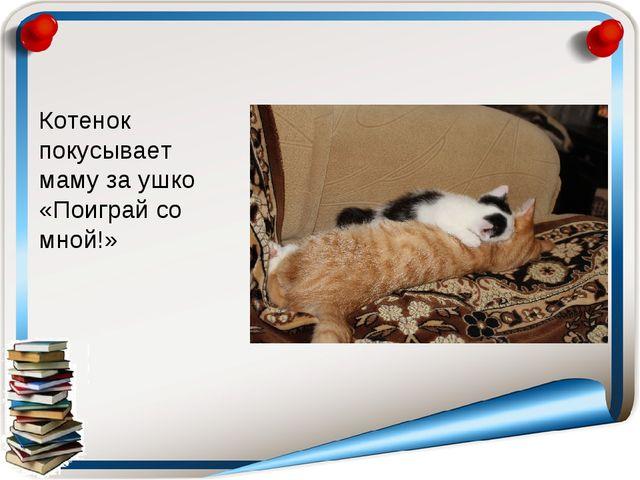 Котенок покусывает маму за ушко «Поиграй со мной!»