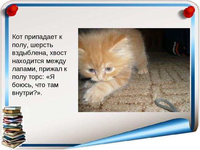 Кот припадает к полу, шерсть вздыблена, хвост находится между лапами, прижал...