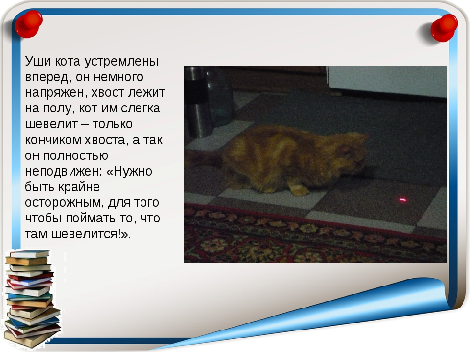 Уши кота устремлены вперед, он немного напряжен, хвост лежит на полу, кот им...