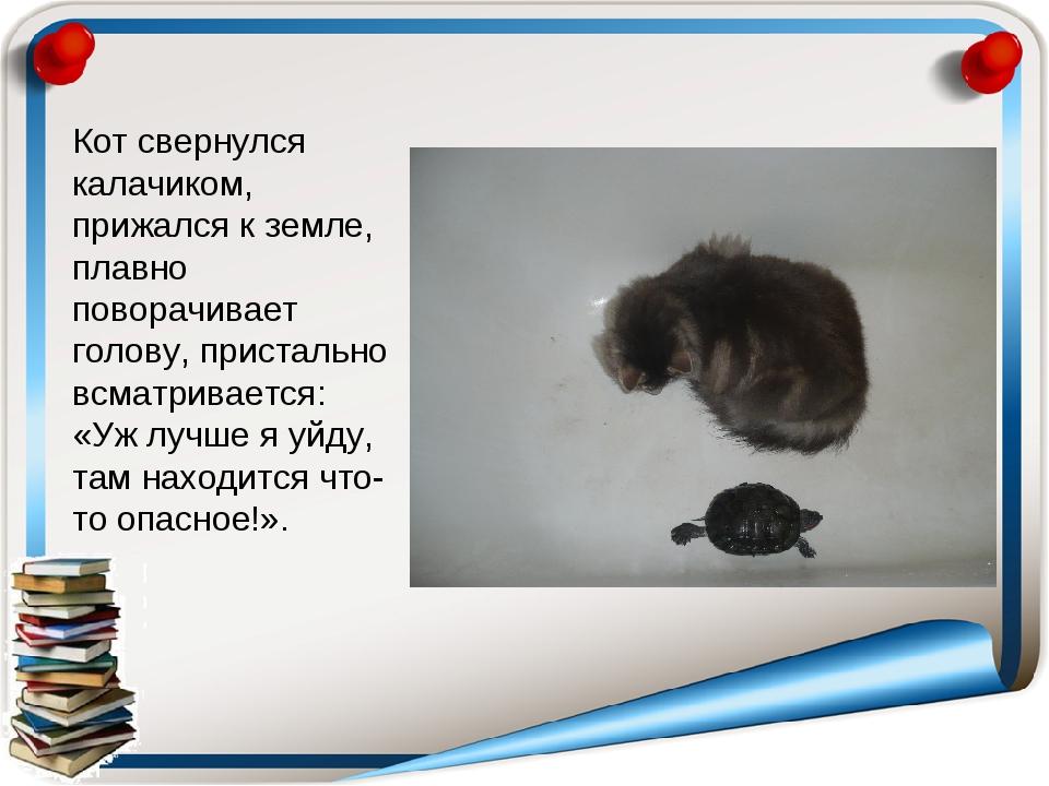 Кот свернулся калачиком, прижался к земле, плавно поворачивает голову, прист...