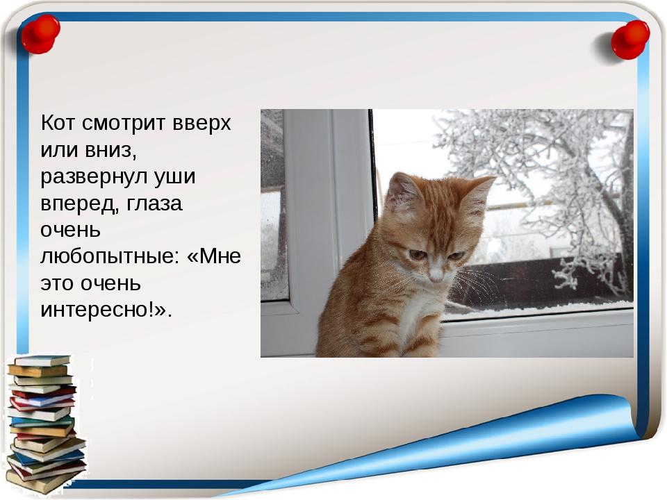 Кот смотрит вверх или вниз, развернул уши вперед, глаза очень любопытные: «Мн...
