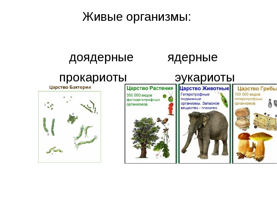 Живые организмы: доядерные ядерные прокариоты эукариоты