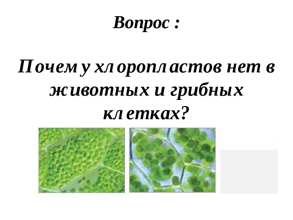 Вопрос : Почему хлоропластов нет в животных и грибных клетках?