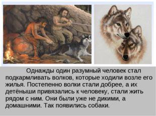 Однажды один разумный человек стал подкармливать волков, которые ходили воз