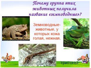 Почему группа этих животных получила название «земноводные»? Земноводные- жив