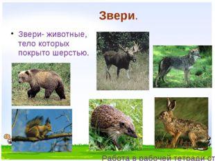 Звери. Звери- животные, тело которых покрыто шерстью. Работа в рабочей тетрад