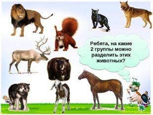 Ребята, на какие 2 группы можно разделить этих животных?