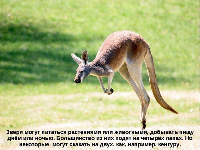Звери могут питаться растениями или животными, добывать пищу днём или ночью....