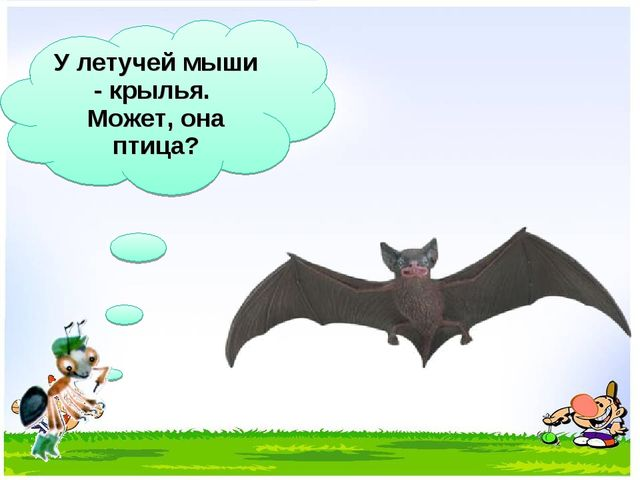 У летучей мыши - крылья. Может, она птица?