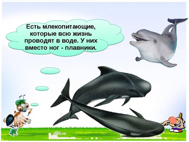 Есть млекопитающие, которые всю жизнь проводят в воде. У них вместо ног - пла...
