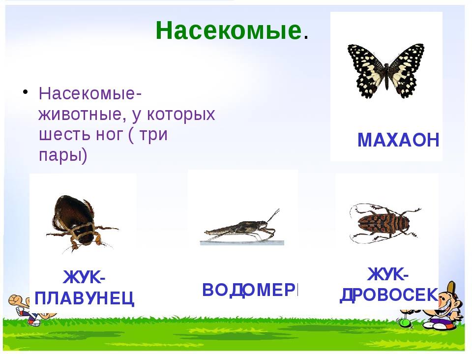 Насекомые. Насекомые- животные, у которых шесть ног ( три пары)