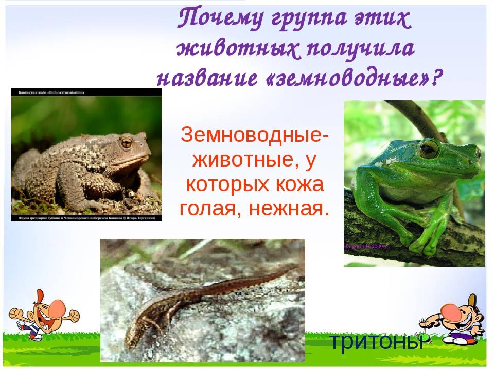 Почему группа этих животных получила название «земноводные»? Земноводные- жив...
