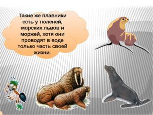Такие же плавники есть у тюленей, морских львов и моржей, хотя они проводят в
