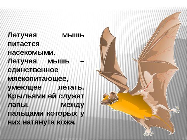 Летучая мышь питается насекомыми. Летучая мышь – единственное млекопитающее,...