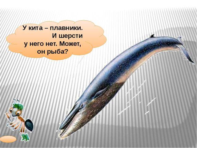 У кита – плавники. И шерсти у него нет. Может, он рыба?