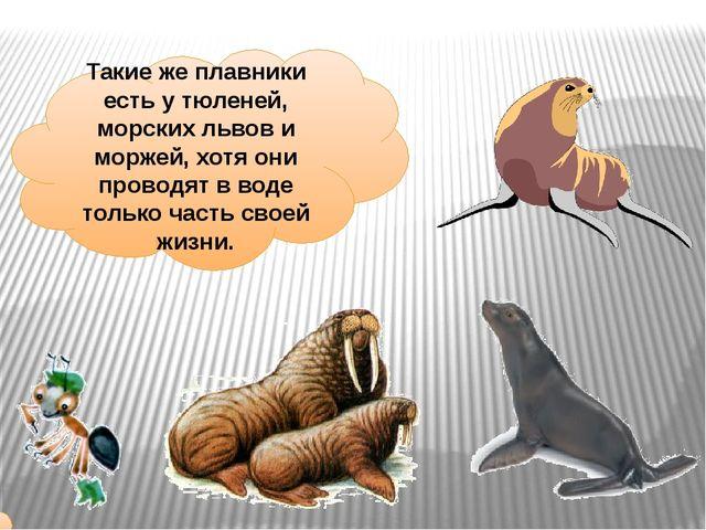 Такие же плавники есть у тюленей, морских львов и моржей, хотя они проводят в...
