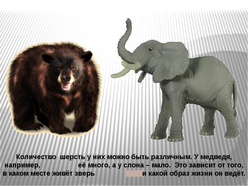 Количество шерсть у них можно быть различным. У медведя, например, её много,...