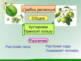 Сравни растения Общее Кустарники Приносят пользу Различие Растение леса Расте