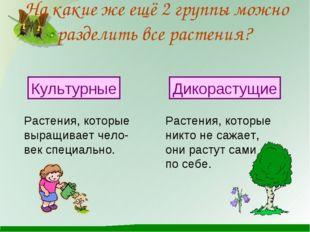 На какие же ещё 2 группы можно разделить все растения? Растения, которые выра