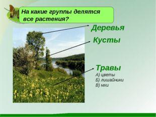 Деревья На какие группы делятся все растения?