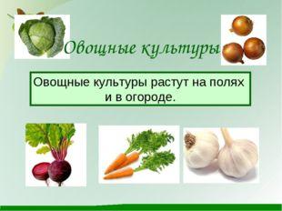 Овощные культуры Овощные культуры растут на полях и в огороде.