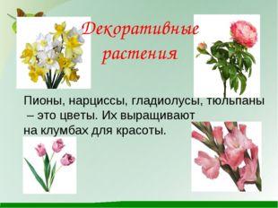 Декоративные растения Пионы, нарциссы, гладиолусы, тюльпаны – это цветы. Их