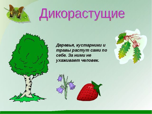 Деревья, кустарники и травы растут сами по себе. За ними не ухаживает человек.
