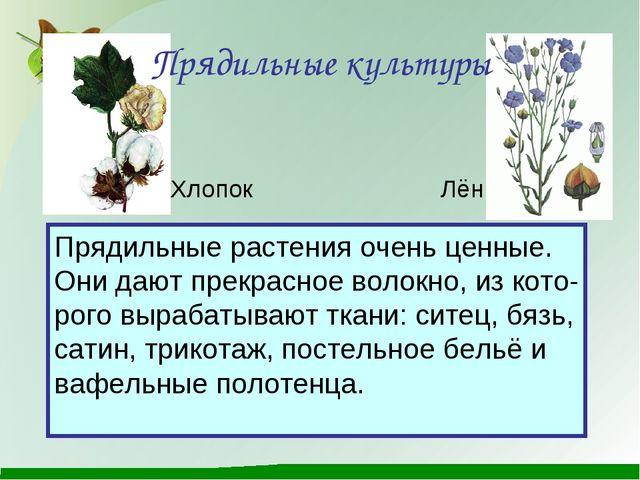 Прядильные культуры Прядильные растения очень ценные. Они дают прекрасное вол...